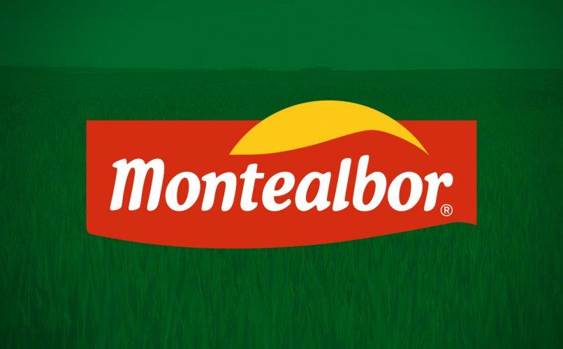 Diseño de Branding Montealbor
